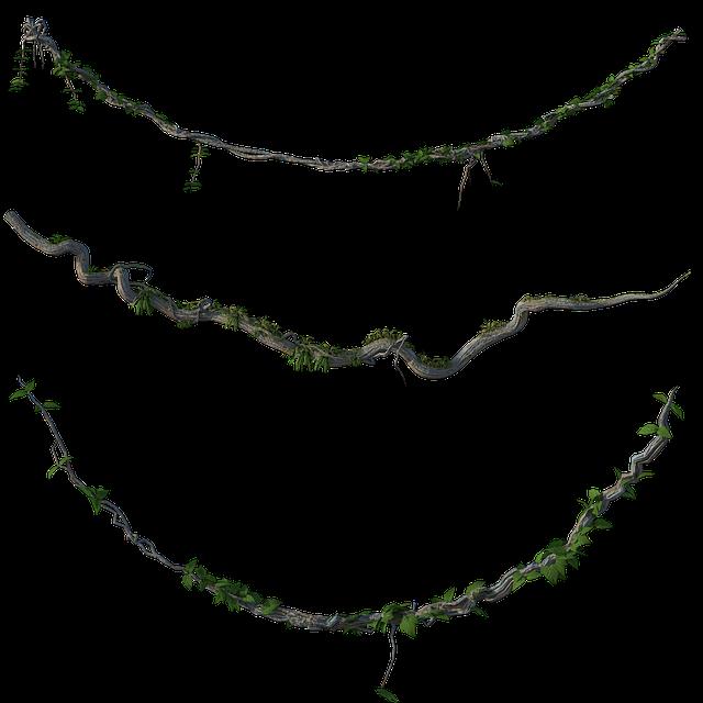 Vines, Jungle, Leaves, Wooden, Forest, Rainforest