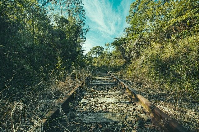 Railroad Tracks, Jungle, Overgrown, Trees, Forest, Wild