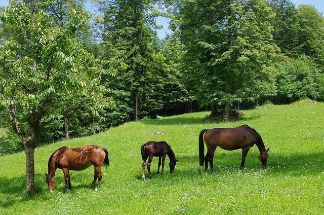 Horse, Horses, Frank Mountain, Jura, Ballenberg