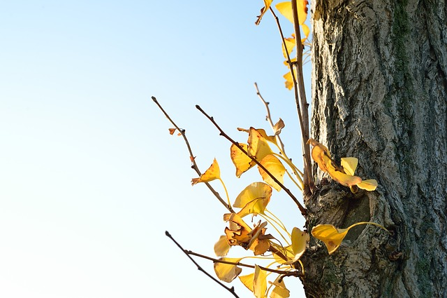 Japan, Landscape, Natural, K, Wood, Autumn, Plant, Leaf