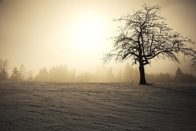 Winter Sun, Winter, Snow, Tree, Wintry, Kahl