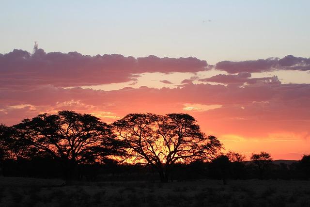 Sunset, Silhouette, Kalahari, Africa, Sky