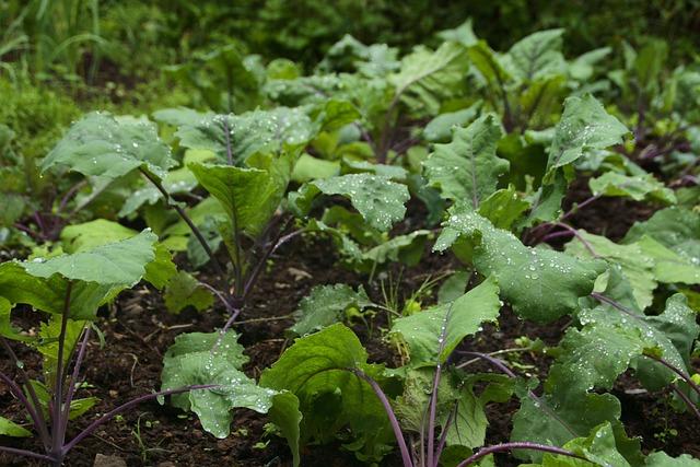 Leaf, Flora, Nature, Agriculture, Food, Kale, Organic