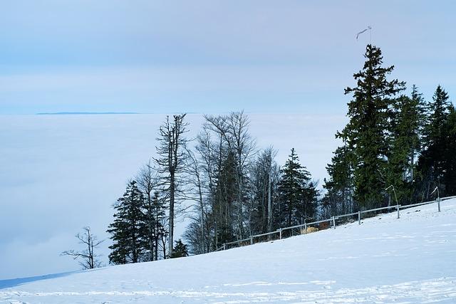 Fog, Kandel, Black Forest, Winter, Mist, Rising Fog