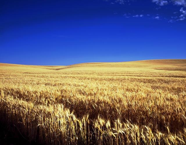 Kansas, Farm, Scenic, Sky, Clouds, Wheat, Farmland