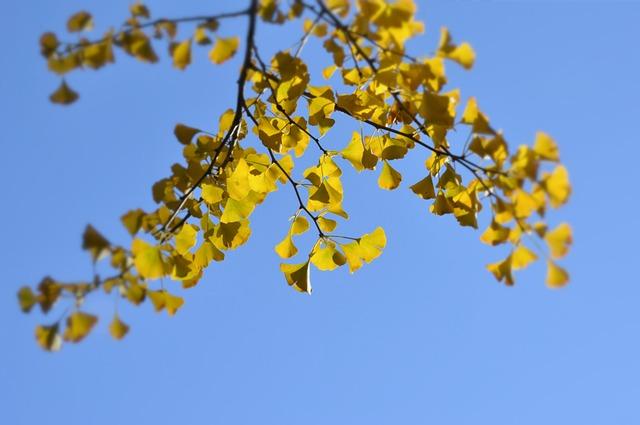 The Scenery, Trees, Ginkgo, Branch, Kentucky, Leaf