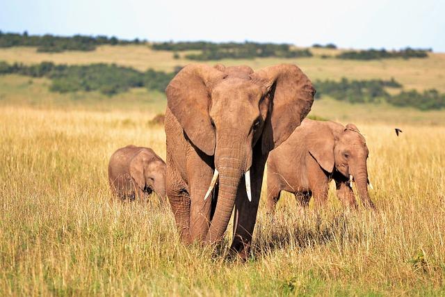 Animals, Elephants, Kenya, Tusks, Wild Animal, Safari