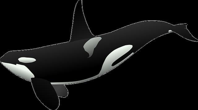 Orca, Killer Whale, Sea Mammal, Marine Life, Sea Life