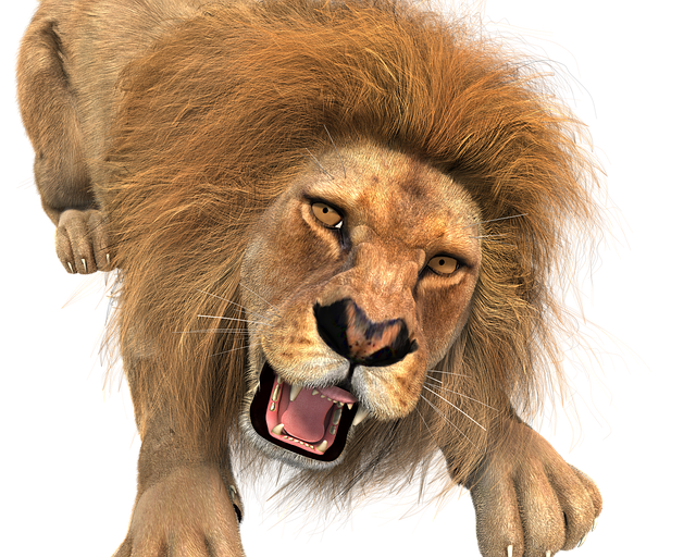 Animal, Lion, Male, King Of The Beasts, Big Cat, Wild