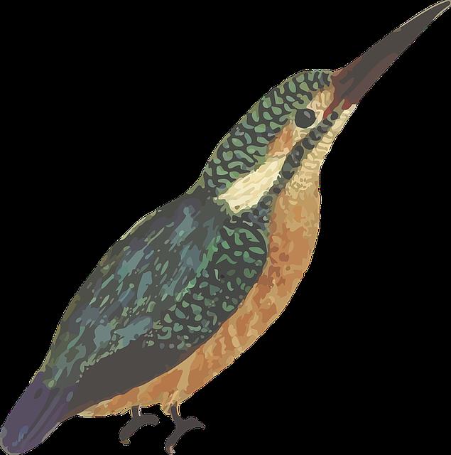Animal, Bird, Kingfisher
