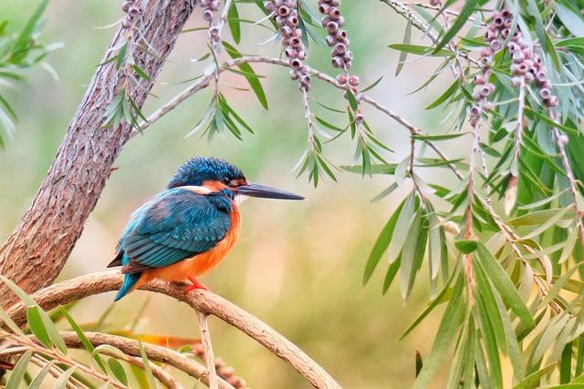 Kingfisher, Natural, Bird, Wildlife, Animal, Color