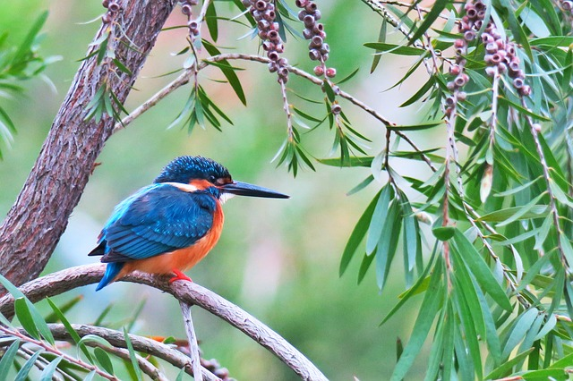 Kingfisher, Nature, Bird, Tree, Outdoor, Wild, Wood