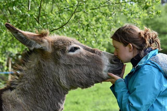 Kisses, Kiss, Girl And Donkey, Tenderness, Affection