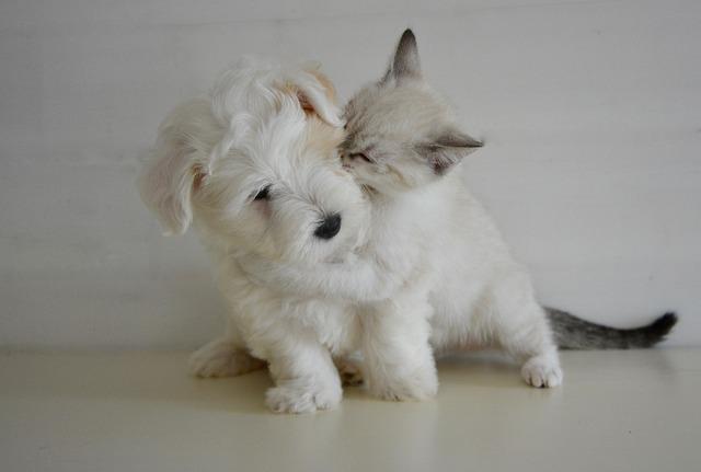 Kiss, Kisses, Puppy Kitten, Dog Cat, Tenderness