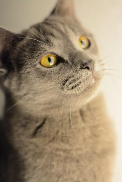 Cat, Kitten, Portrait, Domestic Cat, Animal, Pet, Cute