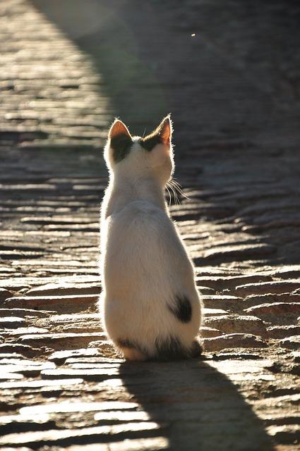 Cat, Shadow, Kitten, Sunlight, Animal, Animal World
