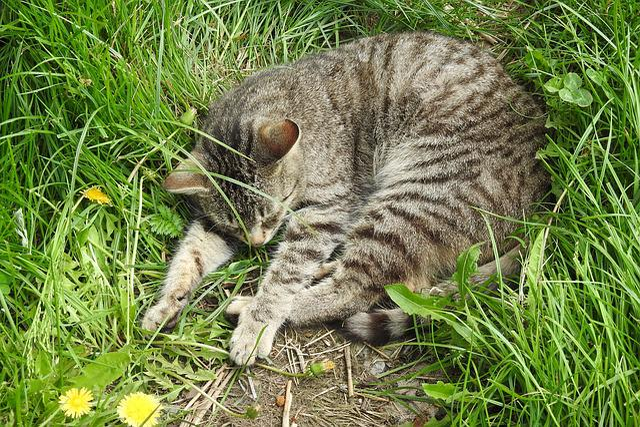 Lawn, Nature, Animals, A Little, Charming, Kitten