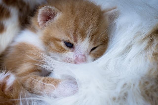 Kitten, Affection, Newborn, Pet, Animals, Feline