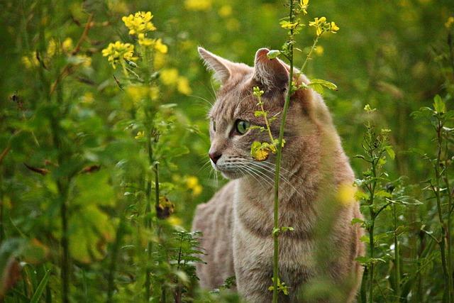 Cat, Kitten, Mieze, Breed Cat, Cat's Eyes, Mustard
