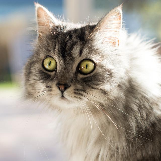 Cat, Cute, Animals, Kitten, Fur