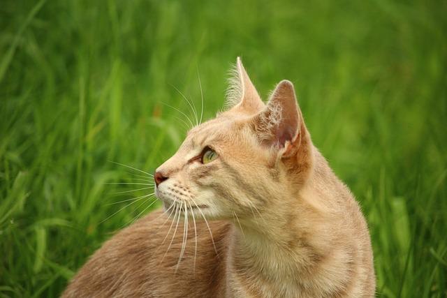 Cat, Kitten, Mieze, Mackerel, Breed Cat, Tiger Cat