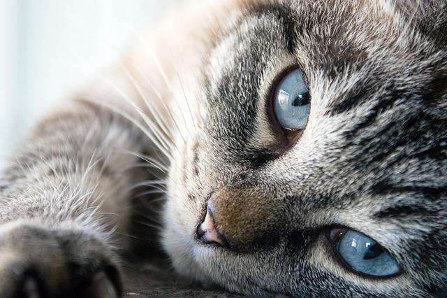 Cat, Cute, Animal, Mammal, Fur, Kitten, Pet, Eye