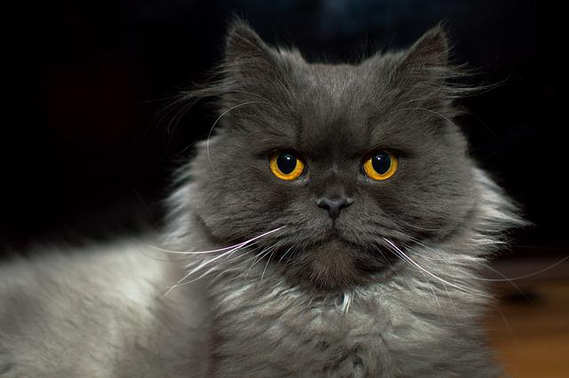 Cat, Kitten, Meows, Sight, Futrzak, Coat, Whiskers