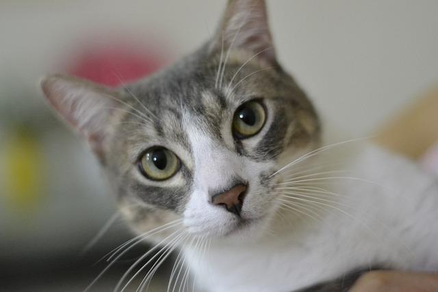Cat, Cute, Kitten, Pet