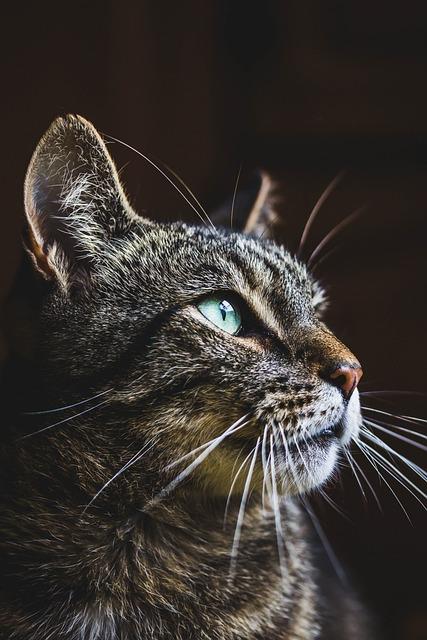 Cat, Animal, Cute, Portrait, Fur, Pet, Kitten