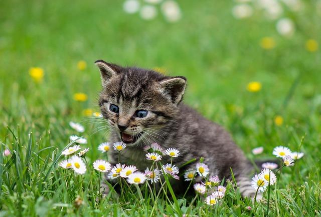 Kitty, Cat, Kitten, Domestic Cat, Animal, Pets, Flowers