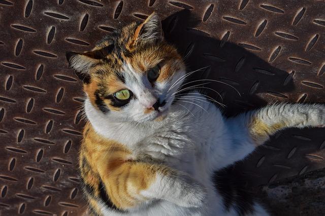 Cat, Street, Animal, Pet, Cute, Domestic, Kitten, Face