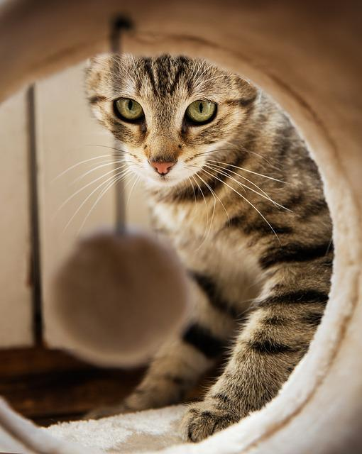 Cat, Animal, Home, Kitten, Arc, Eyes, Room