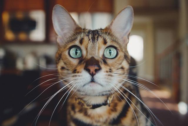 Cat, Kitten, Animal, Pet, Inside