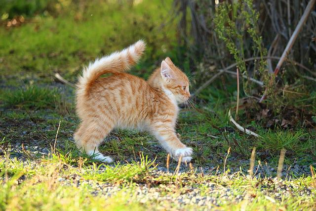 Cat, Kitten, Cat Baby, Young Cats, Mackerel