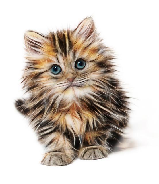 Kitten, Mammal, Animal, Young, Cat, Domestic, Cute