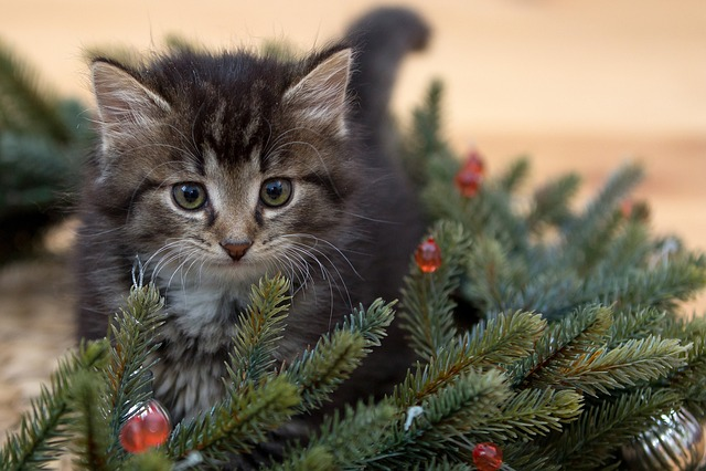Kitten, New Year's Eve, Fir-tree Branches