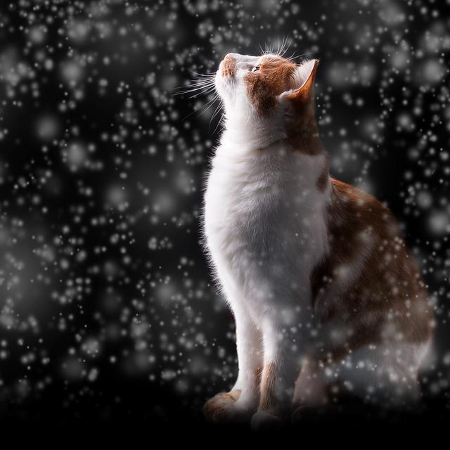 Snow, Cat, Winter, Night, Cold, Adidas, Red Cat, Kitten
