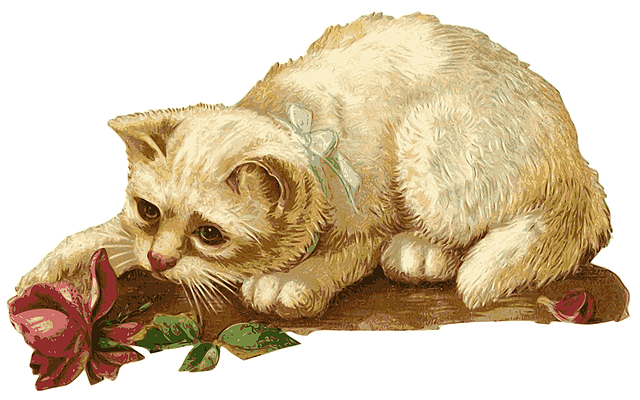 Cat, Kitten, Rosa, Flower, Animal, Pet, Vintage
