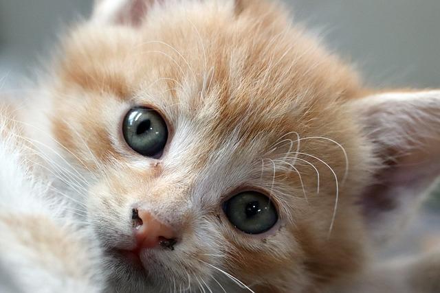 Cat, Baby Cats, Pets, Kitty, Animal, Street Cat, Kitten