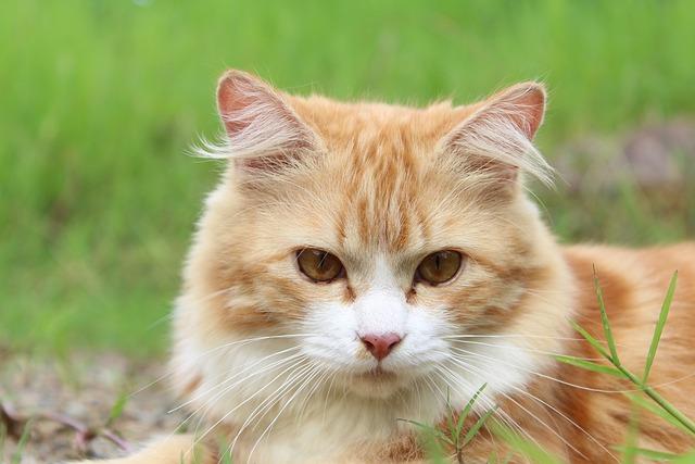 Cat, Feline, Kitty, Kitten, Domestic, Pet, Tabby