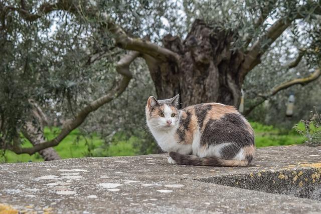 Cat, Stray, Sitting, Animal, Cute, Kitty, Looking