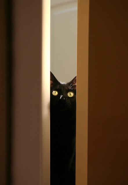 Black Cat, Kitty, Pet, Animal, Eyes, Cute, Cat