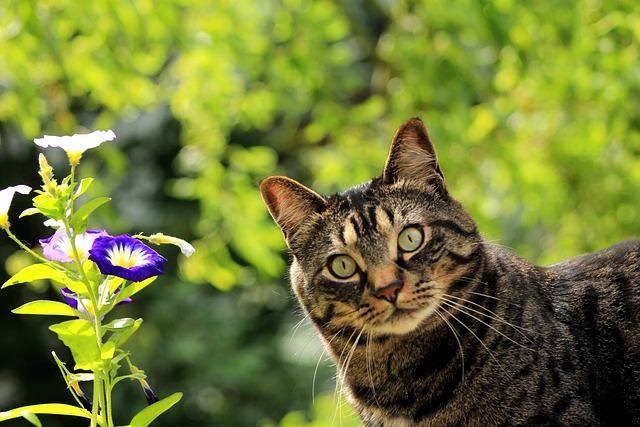 Cat, Kitty, Flower, Spring, Pet, Feline, Nature