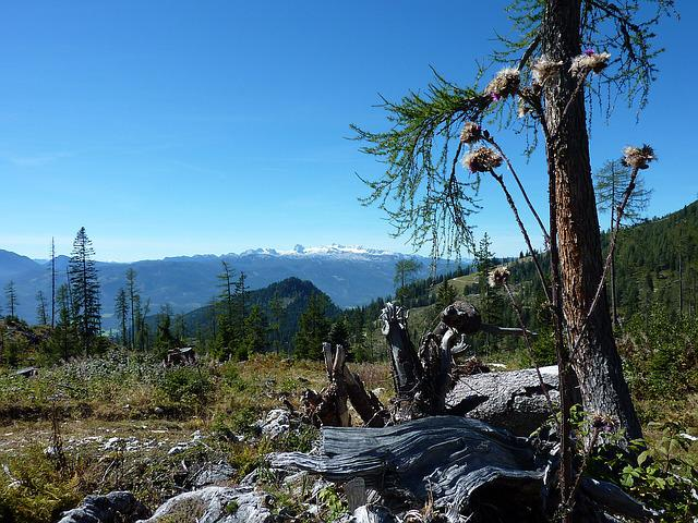 Mountain Plateau, Austria, Kitzbuehel, Weathered, Log