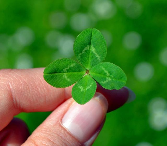 Klee, Four Leaf Clover, Green, Lucky Clover