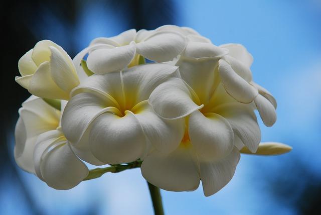 Flower, Thailand, Koh Yao