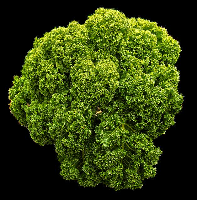 Kale, Brown Cabbage, Krauskohl, Kohl, Ruffled