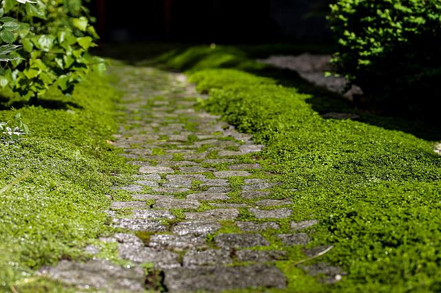 Road, Pavement, Kőjárda, Rocky Road, Path, Nature