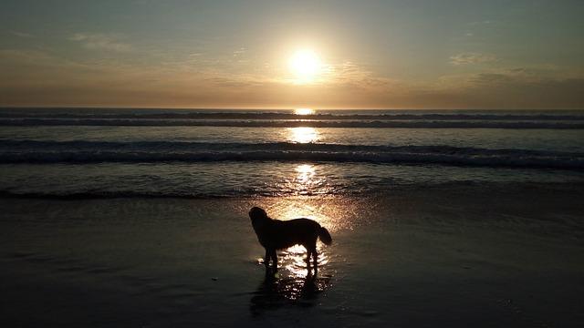 Harvey, Sunset, Kommetjie