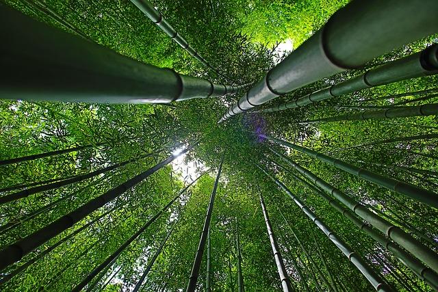 Korea, Damyang, Bamboo, Forest, Nature, Break